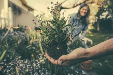 planting-865294_1920